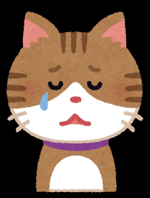 メケメケ(ジャニーズ好きの猫)