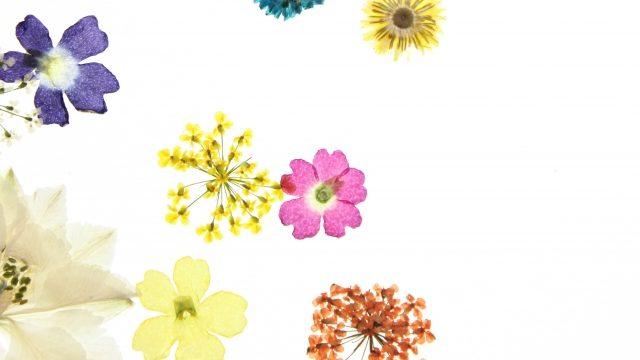 散らばる押し花