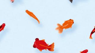 金魚のイラストのパターン
